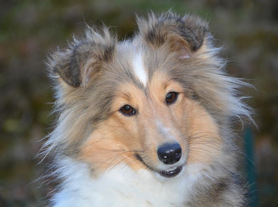 Gebärmutterentzündung bei Hunden