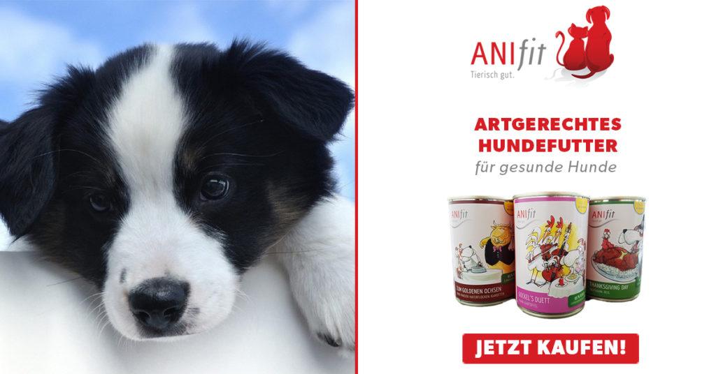 anifit hundefutter bestellen