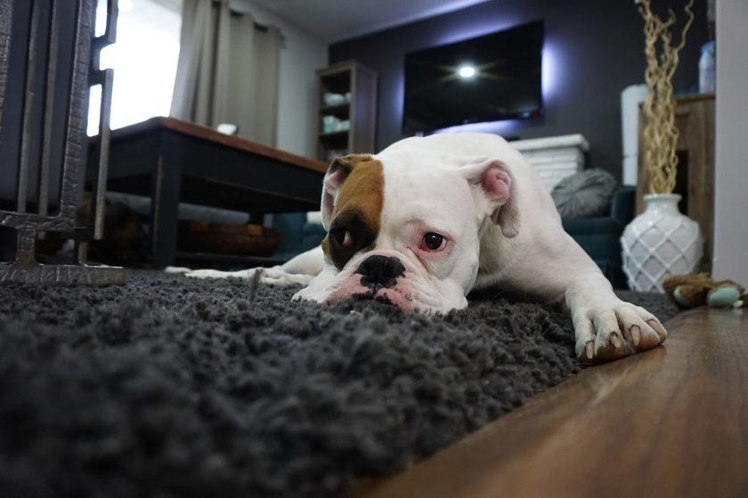 schnüffelteppiche für hunde